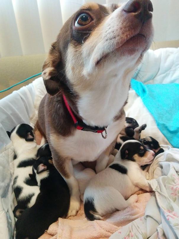 18 hihetetlenül boldog kutyaszülő a kicsinyeivel18