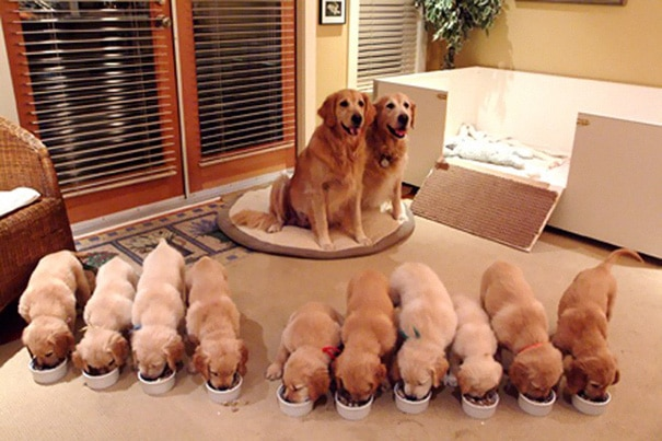 18 hihetetlenül boldog kutyaszülő a kicsinyeivel4
