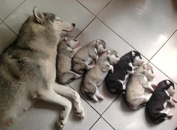 18 hihetetlenül boldog kutyaszülő a kicsinyeivel6
