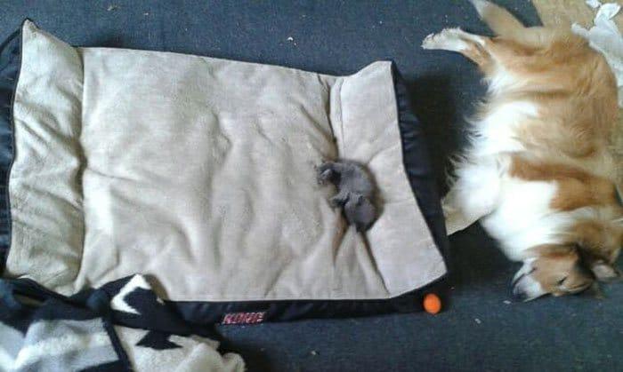 20 macska, aki állandó rettegésben tartja a család kutyáját1