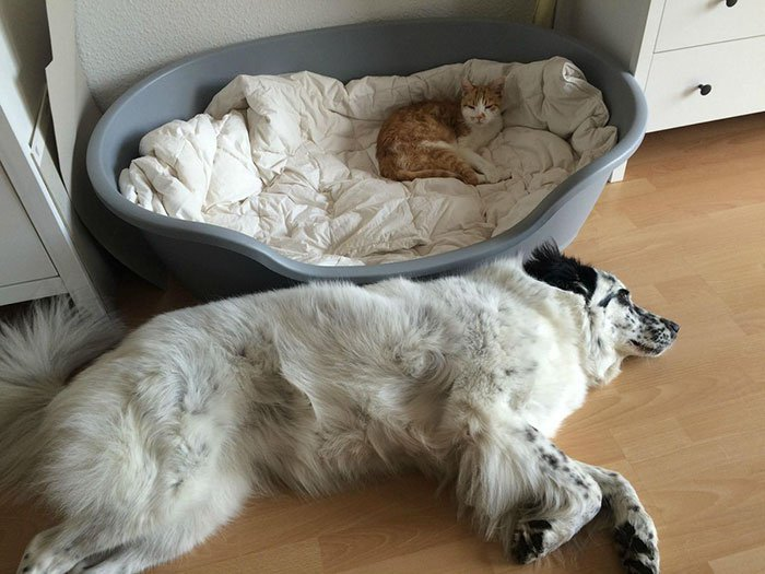 20 macska, aki állandó rettegésben tartja a család kutyáját13