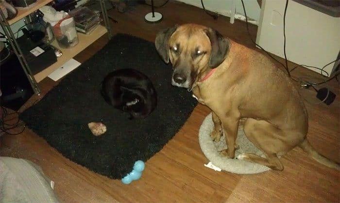 20 macska, aki állandó rettegésben tartja a család kutyáját3