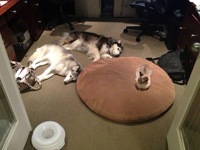 20 macska, aki állandó rettegésben tartja a család kutyáját4