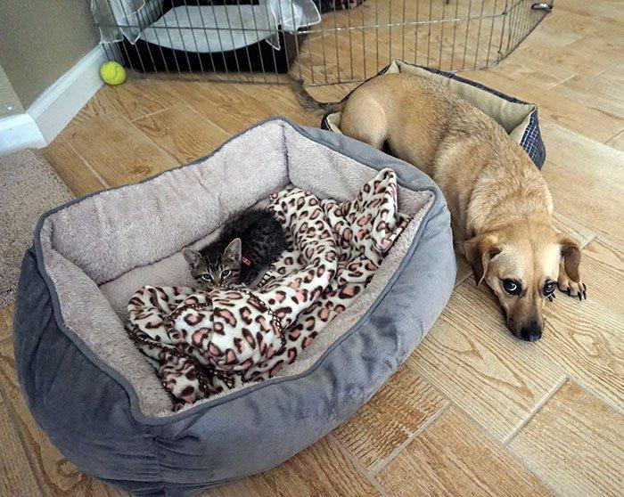 20 macska, aki állandó rettegésben tartja a család kutyáját5