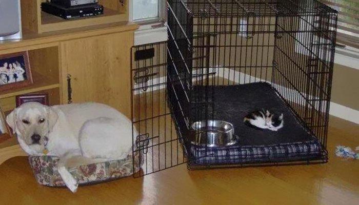 20 macska, aki állandó rettegésben tartja a család kutyáját7