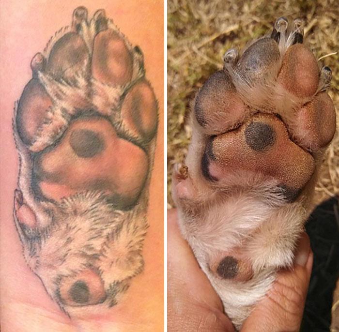 21 gazdi, aki a kutyája tappancsát tetováltatta magára2