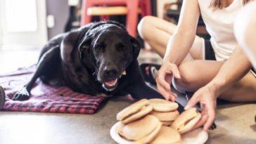 A történet ennek a kutyusnak az utolsó napjáról gyönyörű, és szívszorító1