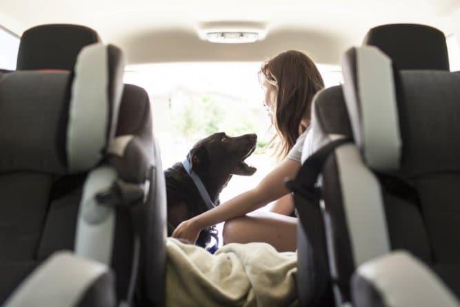 A történet ennek a kutyusnak az utolsó napjáról gyönyörű, és szívszorító10