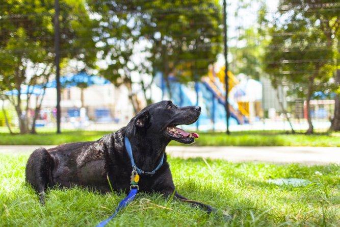 A történet ennek a kutyusnak az utolsó napjáról gyönyörű, és szívszorító15