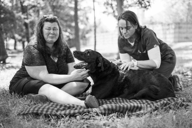 A történet ennek a kutyusnak az utolsó napjáról gyönyörű, és szívszorító16