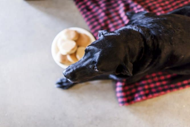 A történet ennek a kutyusnak az utolsó napjáról gyönyörű, és szívszorító3