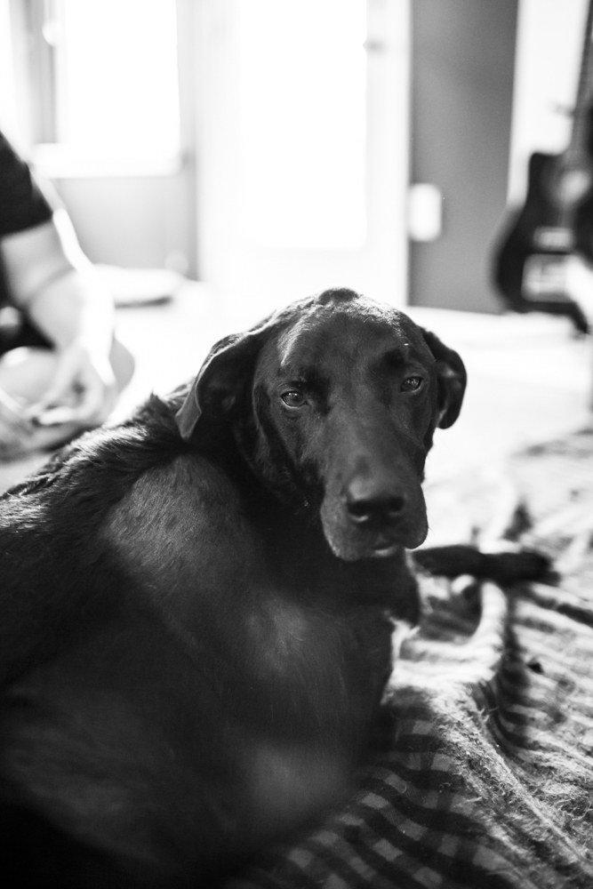 A történet ennek a kutyusnak az utolsó napjáról gyönyörű, és szívszorító5