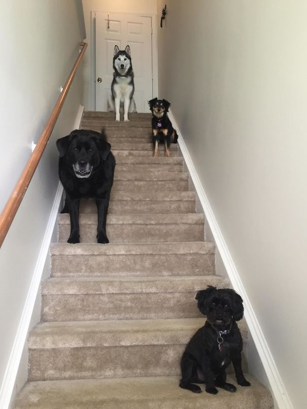 Ezeknek a gazdiknak több, mint 3 házi kedvencük van10