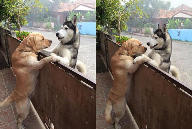 Kiszökött a kapun, hogy megölelje legjobb barátját a magányos kutyus2