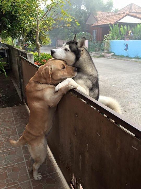 Kiszökött a kapun, hogy megölelje legjobb barátját a magányos kutyus3