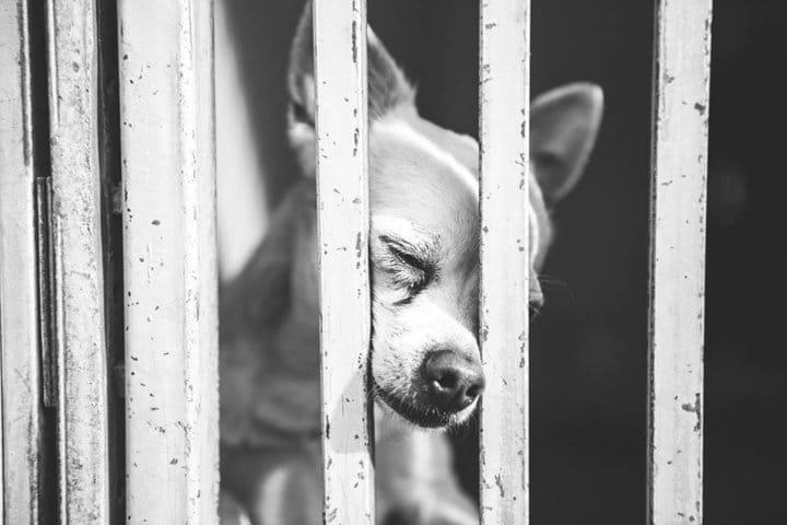 Mancsait összerakva könyörgött a kutya, hogy fogadják őt örökbe!2