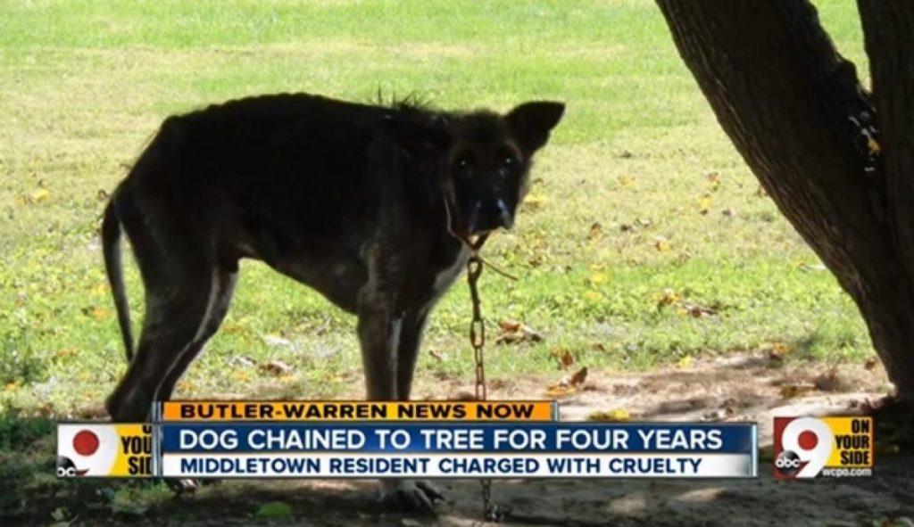 Négy évig fához kötözte, és éheztette a kutyáját1