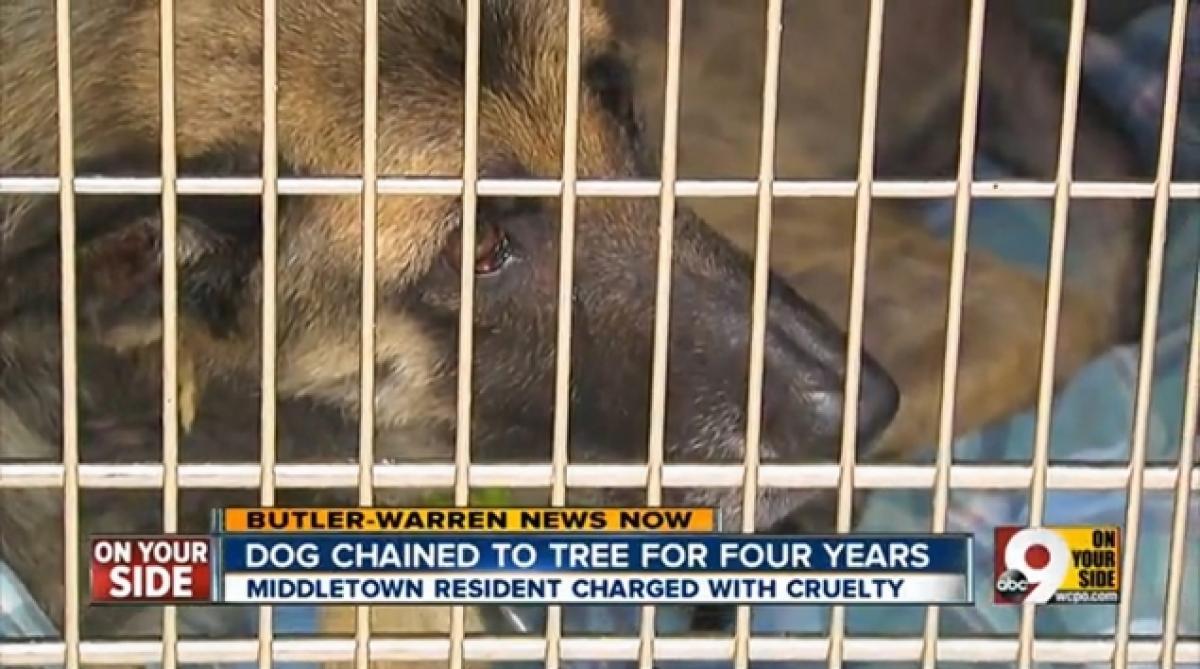 Négy évig fához kötözte, és éheztette a kutyáját2