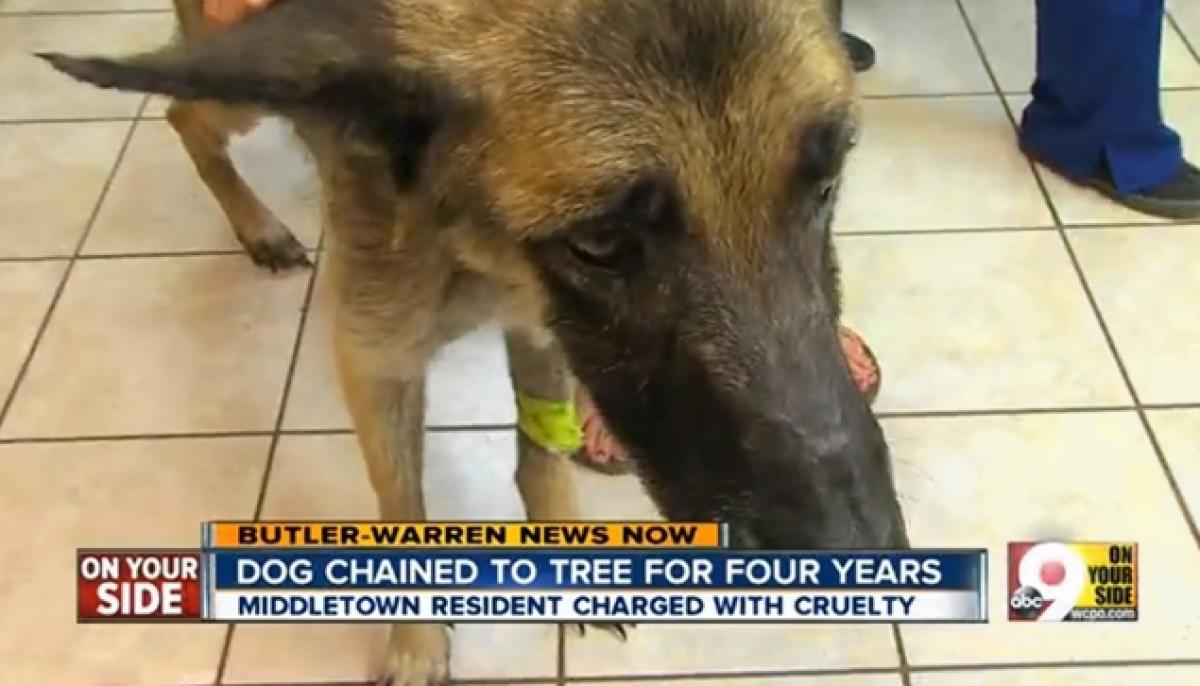 Négy évig fához kötözte, és éheztette a kutyáját4
