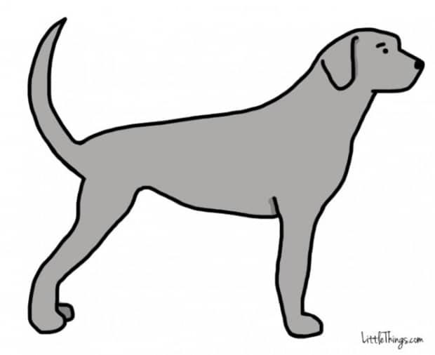 Titkos információkat sugall a kutyák farka1