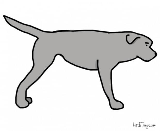 Titkos információkat sugall a kutyák farka2