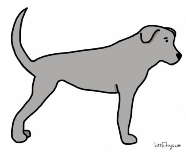 Titkos információkat sugall a kutyák farka3