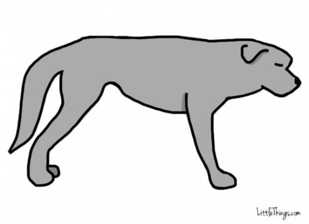 Titkos információkat sugall a kutyák farka4