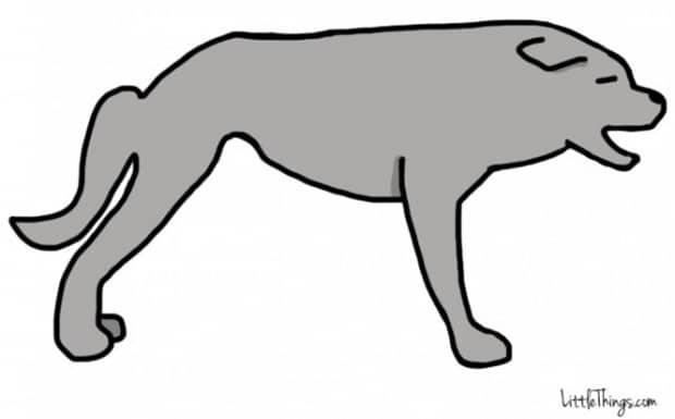 Titkos információkat sugall a kutyák farka5