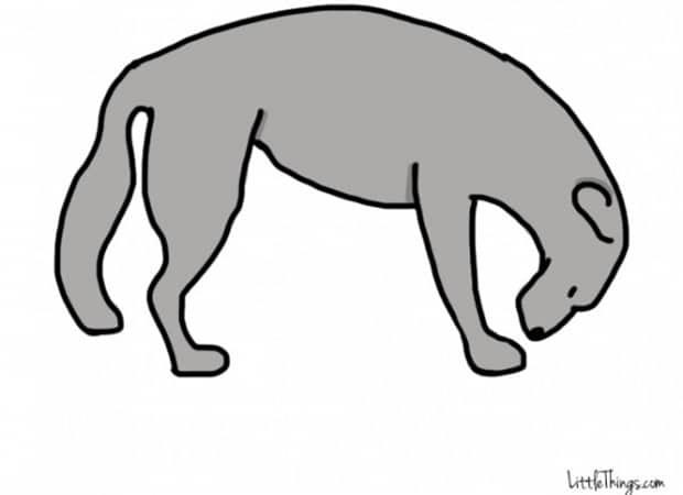 Titkos információkat sugall a kutyák farka6