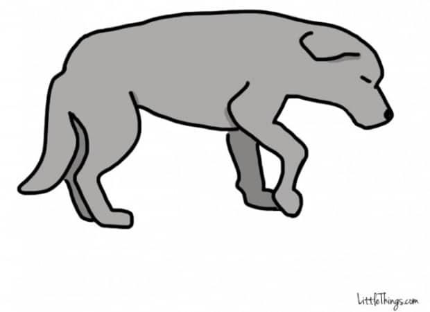 Titkos információkat sugall a kutyák farka7