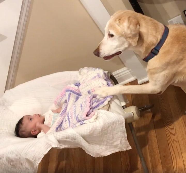 14 kutya, aki úgy döntött kipróbálja a bébiszitterkedést1