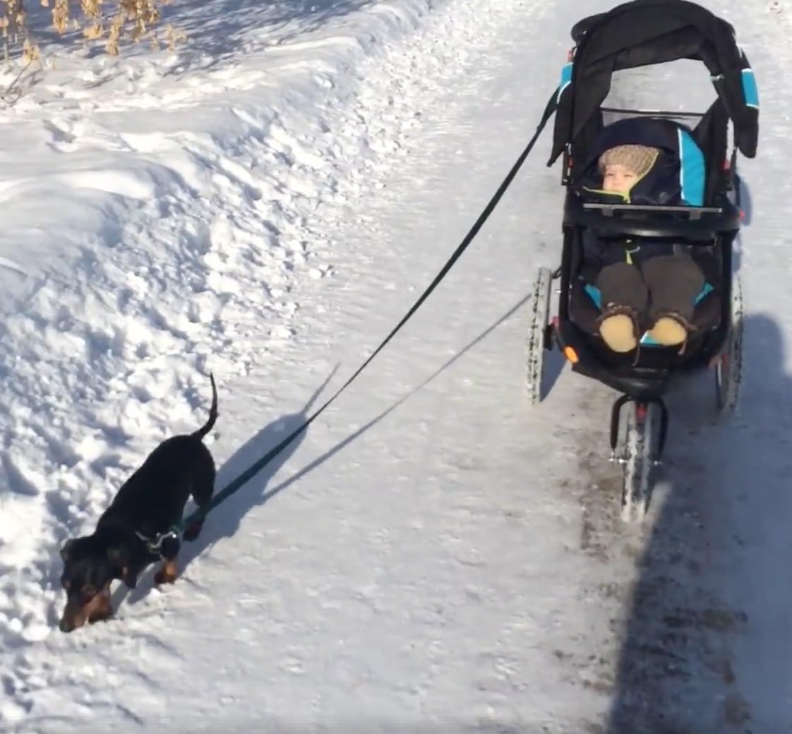 14 kutya, aki úgy döntött kipróbálja a bébiszitterkedést2