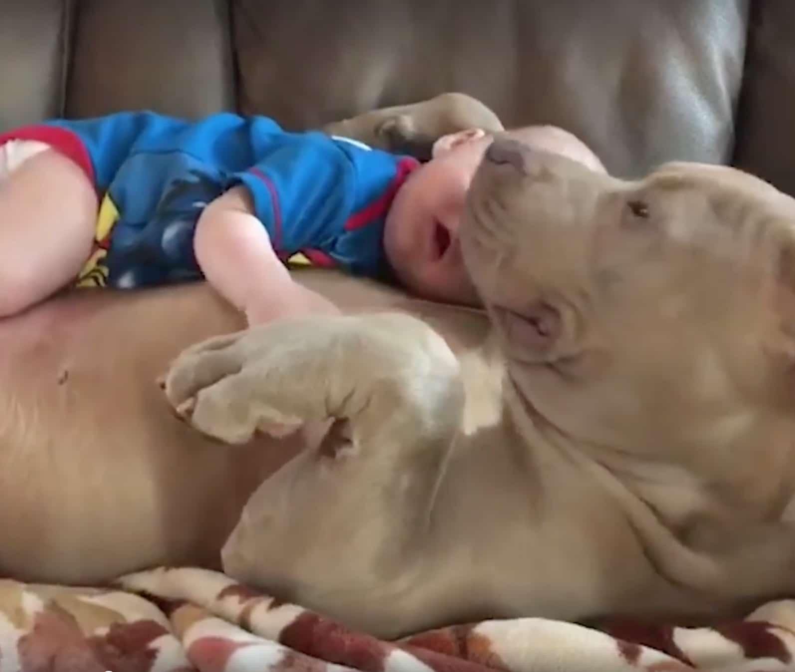 14 kutya, aki úgy döntött kipróbálja a bébiszitterkedést3