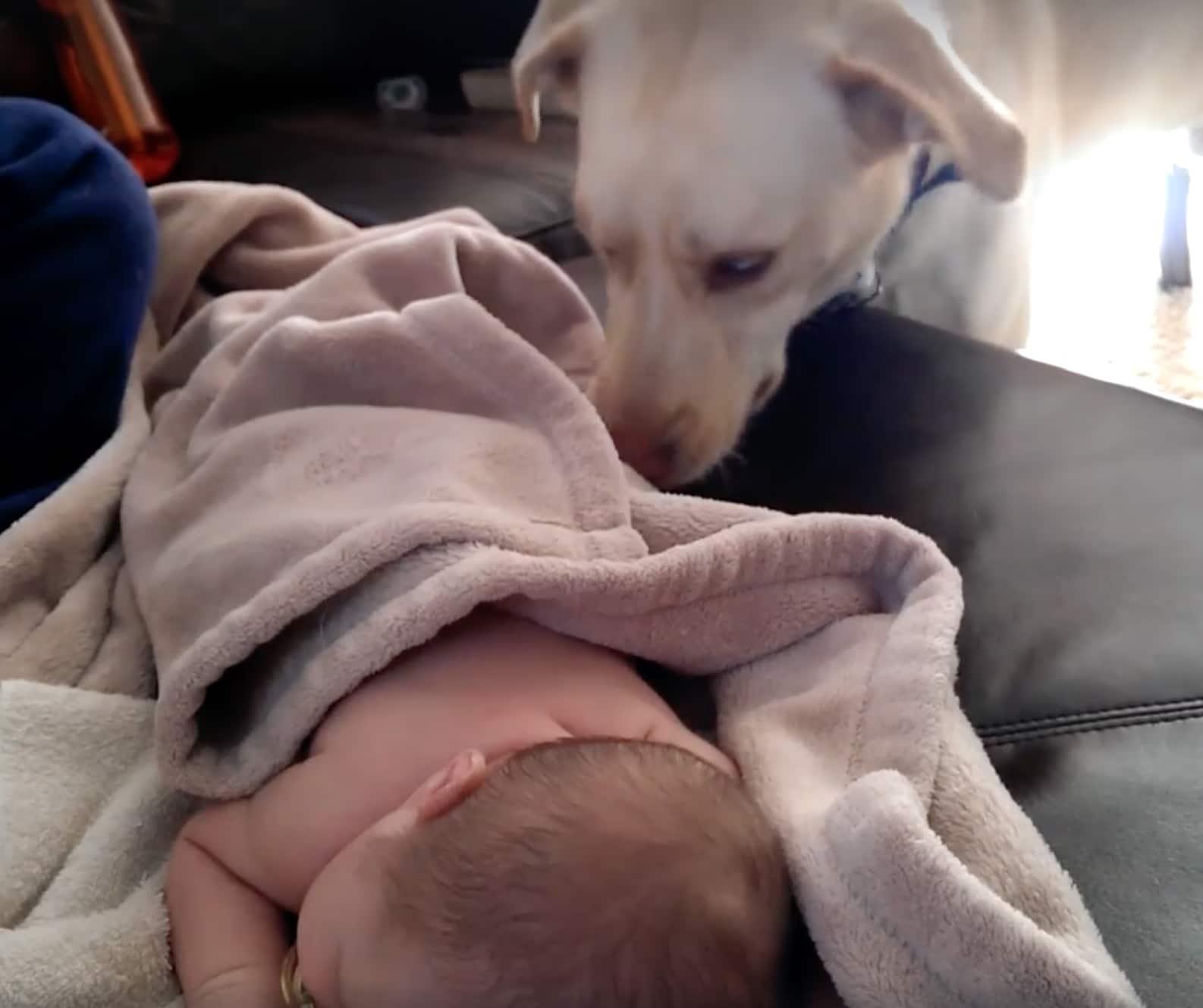 14 kutya, aki úgy döntött kipróbálja a bébiszitterkedést4