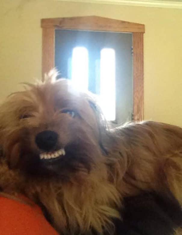 16 kutya, aki elfelejtette hogyan is kell kutyának lenni11