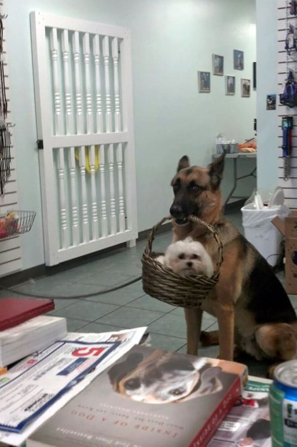 16 kutya, aki elfelejtette hogyan is kell kutyának lenni3 (1)