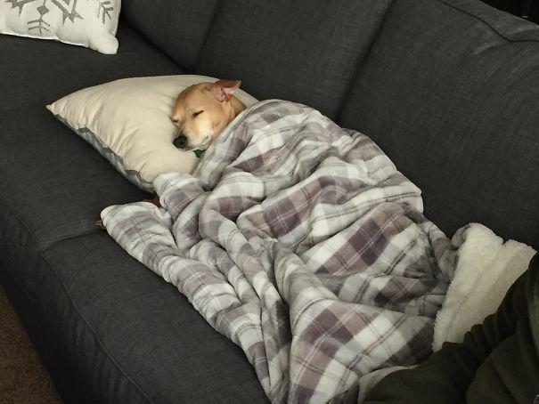 16 kutya, aki elfelejtette hogyan is kell kutyának lenni3 (2)