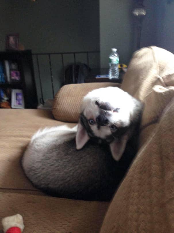 16 kutya, aki elfelejtette hogyan is kell kutyának lenni6