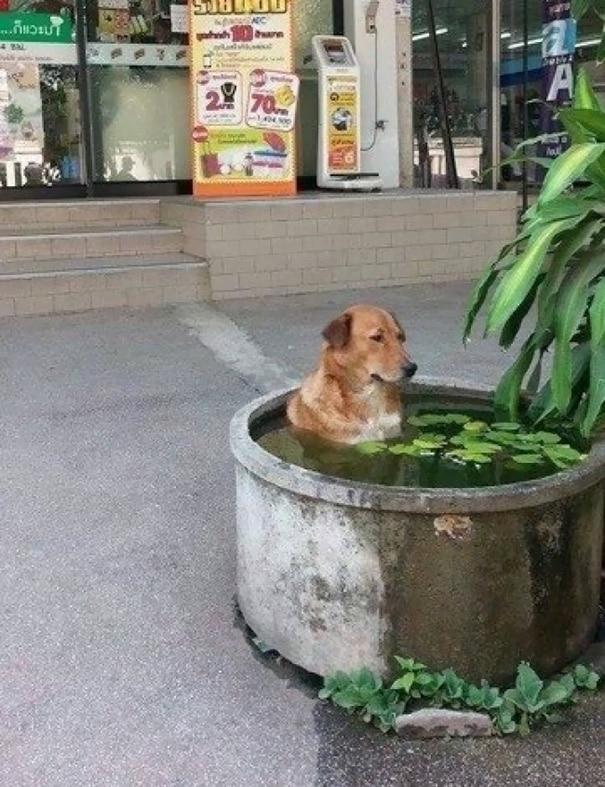 16 kutya, aki elfelejtette hogyan is kell kutyának lenni8