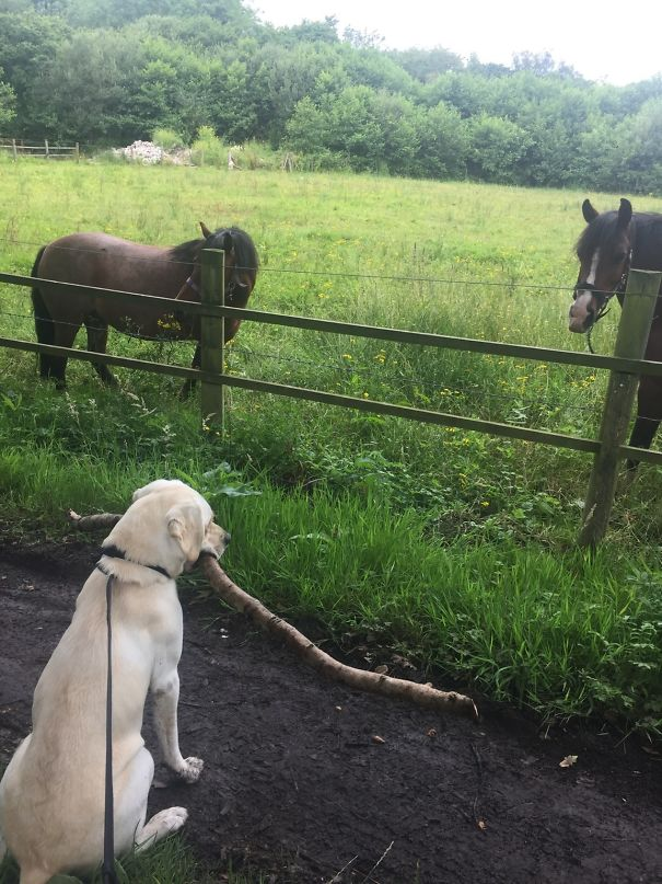 16 kutya, aki elfelejtette hogyan is kell kutyának lenni9