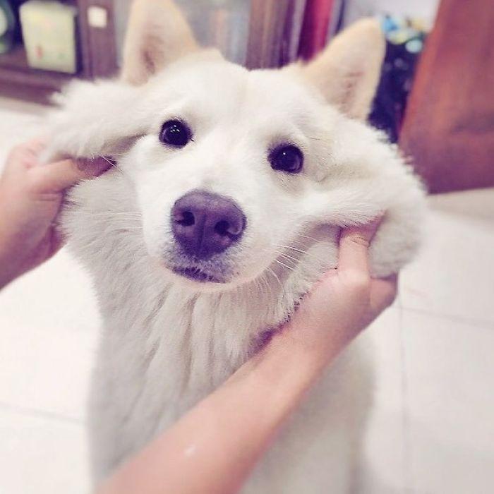 17 tündéri kutyapofa, amit mindenki meg akar dögönyözni5