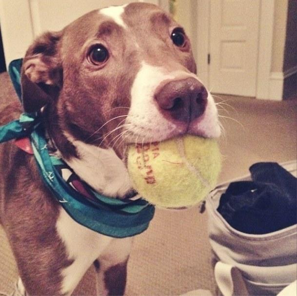 19 ok, amiért hálás lehetsz kutyádnak11