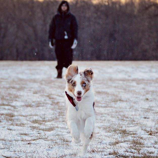 19 ok, amiért hálás lehetsz kutyádnak17
