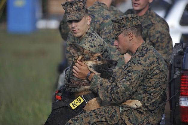 19 ok, amiért hálás lehetsz kutyádnak5