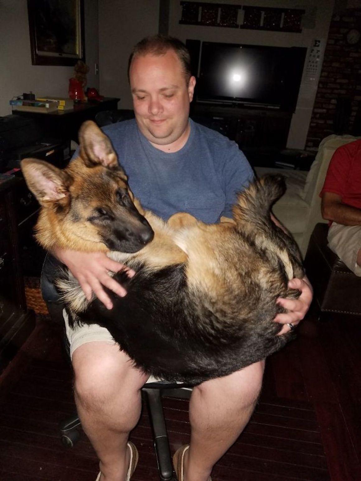 29 nagyra nőtt kutya23
