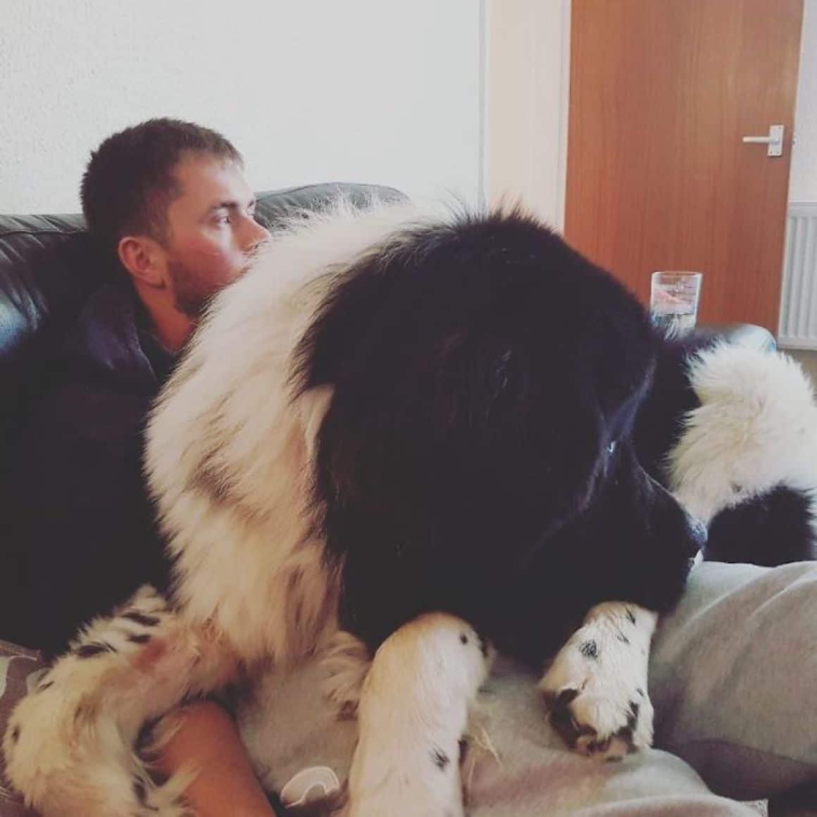 29 nagyra nőtt kutya24