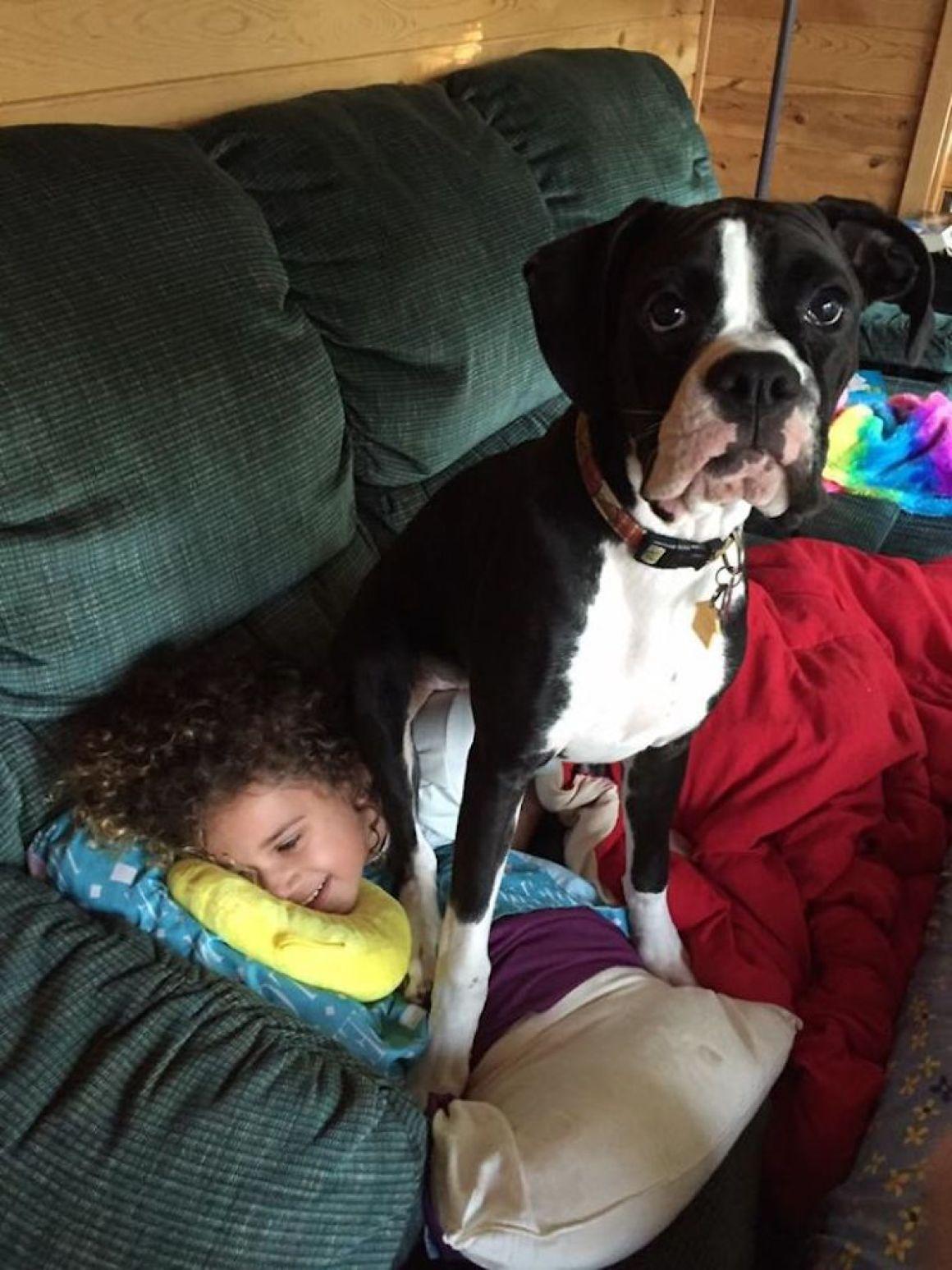 29 nagyra nőtt kutya26