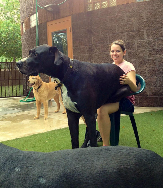 29 nagyra nőtt kutya3