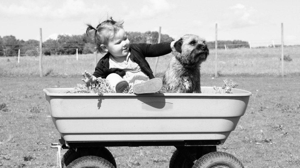 5 ok, amiért a kutya jó hatással van a gyerekre1