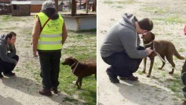 A 2 éve elszökött kutya nem ismeri meg gazdáját